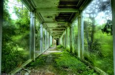 A glass-walled corridor at Cleveland's abandoned aquarium in Ohio is taken over by overgrown plants