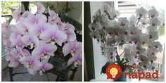 Prvú orchideu som dostala pred 35 rokmi a odvtedy sú tieto úžasné kvety mojou veľkou záľubou. Orchids, Floral Wreath, Wreaths, Flowers, Plants, Gardening, Rarity, Floral Crown, Door Wreaths