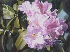 Pink Rhododendron Painting by Sharon Freeman - Pink Rhododendron Fine Art Prints and Posters for Sale
