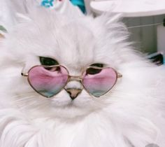 it's who you are cool cats Cool Cats, Cute Kitty Cats, Cute Baby Animals, Funny Animals, Tierischer Humor, Cats Tumblr, Cat Aesthetic, Aesthetic Dark, Cat Wallpaper