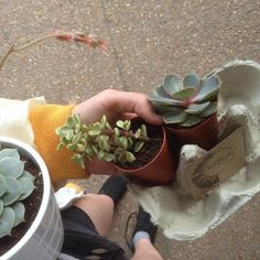 I just bought new plants today but I already want some new ones. Art Hoe Aesthetic, Plant Aesthetic, Echeveria, Plants Are Friends, Flowers Nature, Mellow Yellow, Botany, Evergreen, Planting Flowers