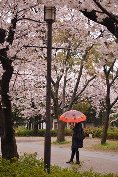 Japan, Osaka, Sakura