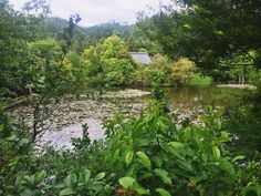 Kyoto, River, Explore, Plants, Outdoor, Outdoors, Plant, Outdoor Games, The Great Outdoors