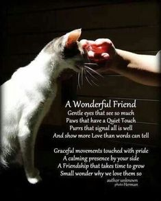 A wonderful friend