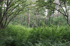 장생의 숲속