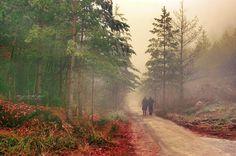 Take a walk, beautiful nature, autumn in Una National park by Maja Topcagic