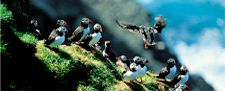 Visit the Faroe Islands - the most appealing destination - Faroe Islands Tourist Guide