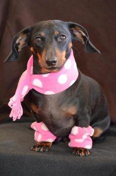scarf and tiny little polka-dot leg warmers!
