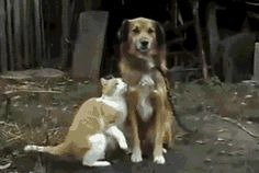 """Dog's face says """"I hope this doesn't end up on the internet.""""   The Best Cat GIF Post In The History Of Cat GIFs"""