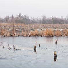 Morningwalk   #morningwalk #staatsbosbeheer #nationaalparkdeweerribben #weerribben #water #giethoorn #waterreijk #nature