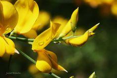 """""""He recuperado mis flores amarillas  que se desparraman de gozo mientras   yo invento palabras con que cantar,  nuevas formas de amar,  vuelvo a ser,  soy otra vez,  por fin otra vez,  soy.""""  Gioconda Belli"""
