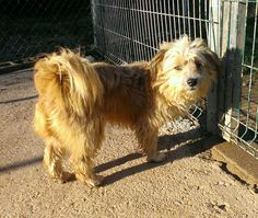 ¡ADOPTADO! SHIRO Macho de 1 año de edad. Pesa 10 kilos. Es muy tranquilo y sociable con los otros perros y las personas.