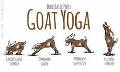 My goats have been diligently working to master these poses!