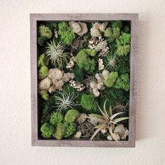 Framed Vertical Wall Garden with Four Air Plants Reindeer Moss Wall Art, Moss Art, Garden Soil, Succulents Garden, Gardening, Vertikal Garden, Arte Floral, Plant Wall, Air Plants