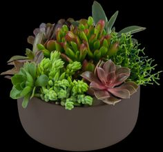 succulents in containers for offices | succulent garden this product is no longer available succulent garden ...