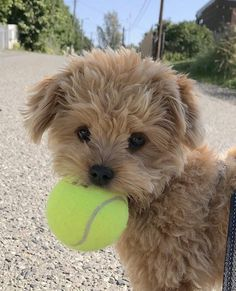 Cute Overload: Internet`s best cute dogs and cute cats are here. Aww pics and adorable animals. Super Cute Puppies, Baby Animals Super Cute, Cute Baby Dogs, Cute Little Puppies, Cute Dogs And Puppies, Cute Little Animals, Cute Funny Animals, Cute Babies, Doggies