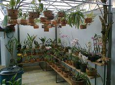 Resultado de imagen para combinar plantas perennes
