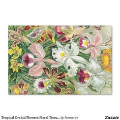 Gorgeous vintage botanical fine art of tropical Orchid Flowers by Haeckel is on this Tissue Paper. Image is public domain due to expired copyright. Orchids, Orchid Flowers, Orchid Images, Paper Napkins For Decoupage, Custom Tissue Paper, Tissue Paper Flowers, Paint Effects, Christmas Card Holders, Tropical