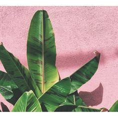 Millennial pink and natural green tones make the perfect interior pairing. Blush pink interior l Millennial pink bedroom l Blush pink home decor Millenial Pink, Pink Nature, Interior Plants, Interior Logo, Interior Shop, Boat Interior, Interior Office, Interior Doors, Interior Design