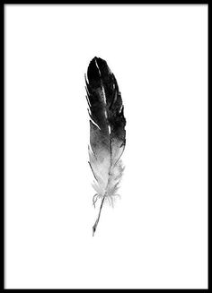 Poster with feather in watercolor . - Poster with feather in watercolor … - Black And White Posters, Black And White Prints, Watercolor Feather, Watercolor Drawing, Wall Drawing, 3d Tattoos, Feather Tattoos, Disney Art Drawings, Gold Poster