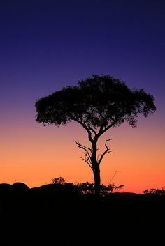 ~~Tree in silhouette, Namibia, Africa by endraum~~