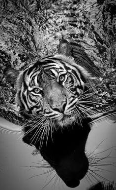 **Beautiful Black and White** - Community - Google+