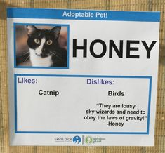 Guy creates humorous description tags for the cats in his local animal shelter in a bid to rehome them.