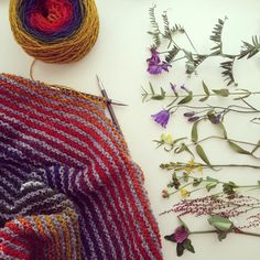 ❤️ #strikk #strikke #strikking #strikkemamma #strikkogbotanikk #knitting #knit #påpinnene #barnestrikk #rødkløver #engsyre #tiriltunge #rome #marimjelle #blåklokke #skjoldbærer #fuglevikke