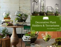 Terriums and Planters From the Home Decor Discovery Community at www.DecoandBloom.com