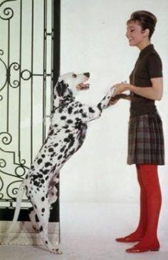 Audrey Hepburn and dog