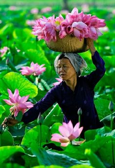The people of Vietnam trying to make a living. Lotus Symbol, Beautiful Flowers, Beautiful People, Travel Photographie, Tres Belle Photo, Beautiful Vietnam, Abs Women, Foto Art, Vietnam Travel