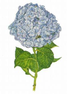 The flowers - drawings