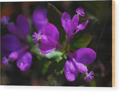 Fringed Polygala Wood Print by Christina Rollo. All wood prints are professionally printed, packaged, and shipped within 3 - 4 business days and delivered ready-to-hang on your wall. Choose from multiple sizes and mounting options. Wood Plank Art, Got Print, Canvas Material, Canvas Art Prints, Simply Beautiful, Fine Art America, Delicate, Artwork, Printed