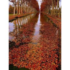 Hello Autumn » ANGEL.GE ❤ liked on Polyvore featuring backgrounds e scenery