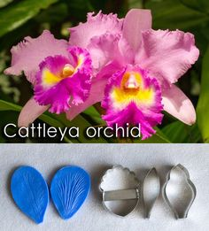 Cattleya orchid cutters and veiners, sugar flowers, gumpaste flowers, cutters, veiners, leaves Edible Diamonds, Cattleya Orchid, First Dates, Cake Decorations, Candy Shop, Sugar Flowers, Gum Paste, Types Of Art, Food Coloring