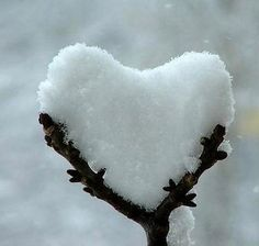 . . . this snowy heart . . . Happy Valentine's Day . . .