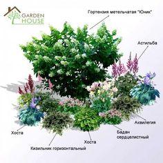 Миксбордер для тени: купить в Киеве | Цены, фото и отзывы в интернет магазине Garden House
