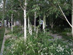 The Cancer Research UK Garden by Saltdeanbeach