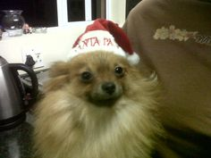 Cute doggy! Enter your pet to win a share of R101 000! #SouthAfrica only. #Pet competition. mymostbeautiful.com/