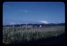 Central Coloso, Aguada, PR Foto de Charles Toth. Fecha: 1964