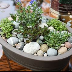 I Have All The Items Just Need To Assemble This Gorgeous Rock Garden
