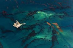 Marea negra. El fotógrafo Daniel Beltrá nos presenta el terrible drama ecológico del vertido de petróleo en el golfo de México.