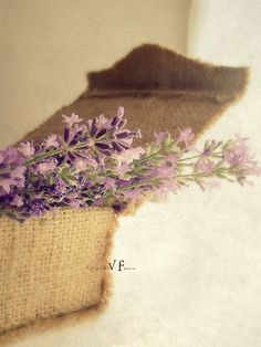 Lavander of my love