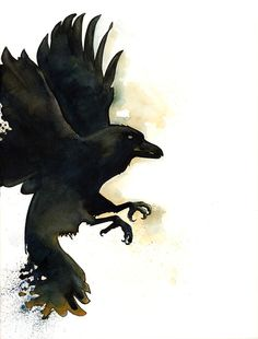 Watercolor Painting Raven Flying Art Print Raven Print Raven with Splatter Tail Raven Art Print Print Print Print Watercolor Splatter, Watercolor Paintings, Raven Flying, Bird Flying, Raven Images, Daddy Tattoos, Black Wall Art, Raven Art, Bird Pictures