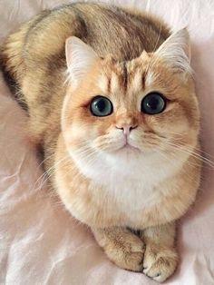 Gorg Cat