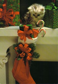 Santa was here!  For more Christmas cats, visit https://www.facebook.com/funholidaycats
