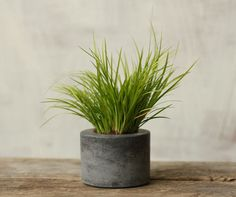 Little Concrete Planter by roughfusion on Etsy, $12.00 #concrete #gray #planter