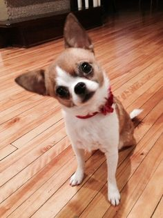 Books, ebooks, articles, and news about Susan Martinez. | See more about chihuahuas.