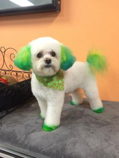 dog+hair+color | Dogs with Dyed Fur | Patti\'s pics | Pinterest