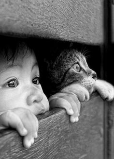 Creo que lo que mas amo en este mundo son los niños y los animales.Ahora compre… I think what I love the most in this world are children and animals. Now I understand God and Noah. Animals And Pets, Funny Animals, Cute Animals, I Love Cats, Cute Cats, Image Chat, Black White, Tier Fotos, Jolie Photo
